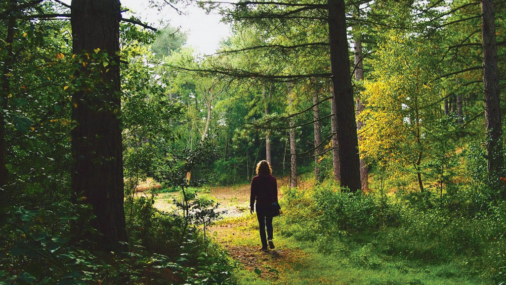Nature Trails image